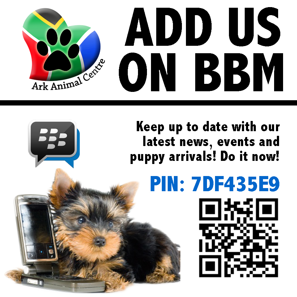 how to add a bbm contact on z10