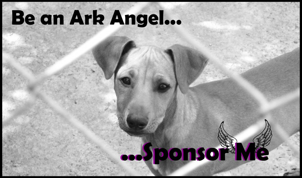 Sponsor an Ark Baby and Make a Difference to their Life!!